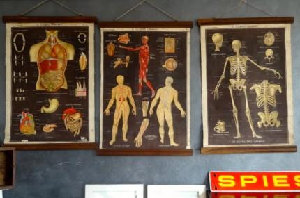 Cartine corpo umano